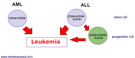 conclusion for leukemia Get access to acute lymphoblastic leukemia essays only from anti essays listed results 1 - 30 get studying today and get the grades you want only at.